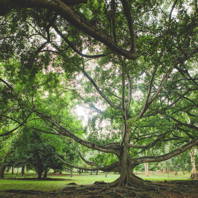A voir Sri Lanka - Peradeniya