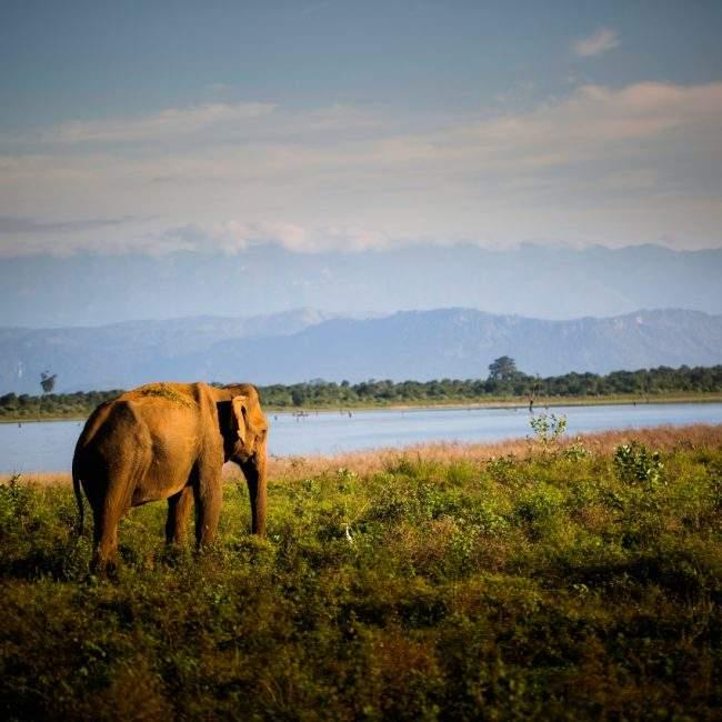 A voir Sri Lanka - Udawalawe