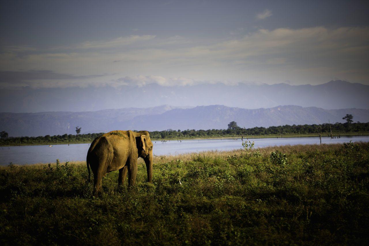 Page d acceuil -Bandeau defilant – elephant