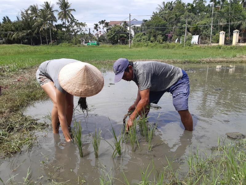 Culture du riz (3)
