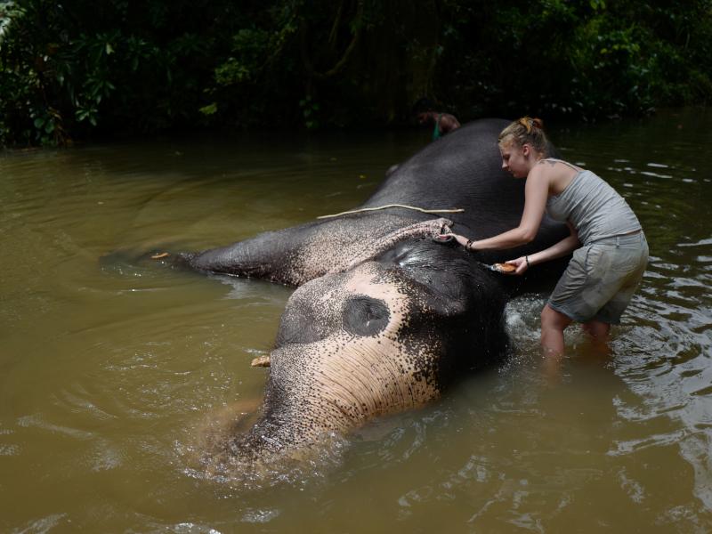 Une touriste participe au bain d'un éléphant dans la Millenium Elephant Foundation au Sri Lanka