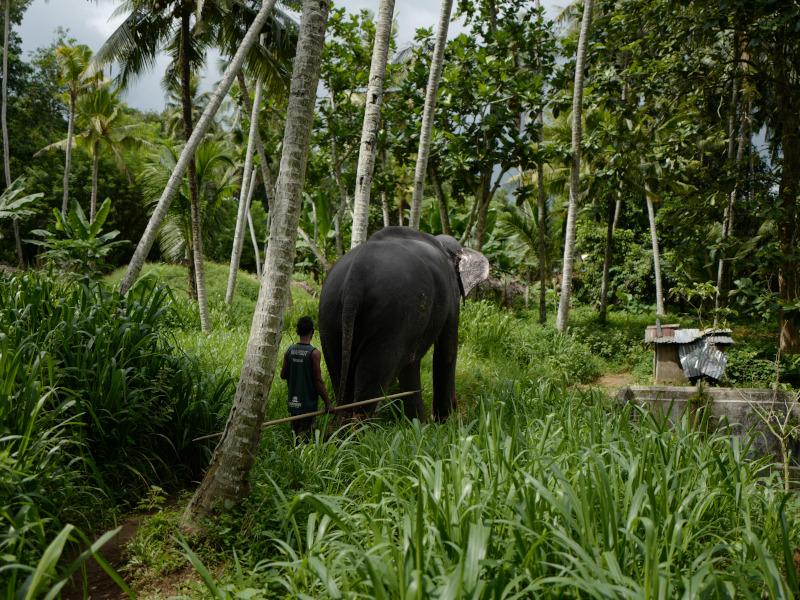 Elephant Walk Experience au Sri Lanka