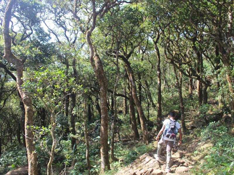 Trek randonnée dans le massif des Knuckles au Sri Lanka