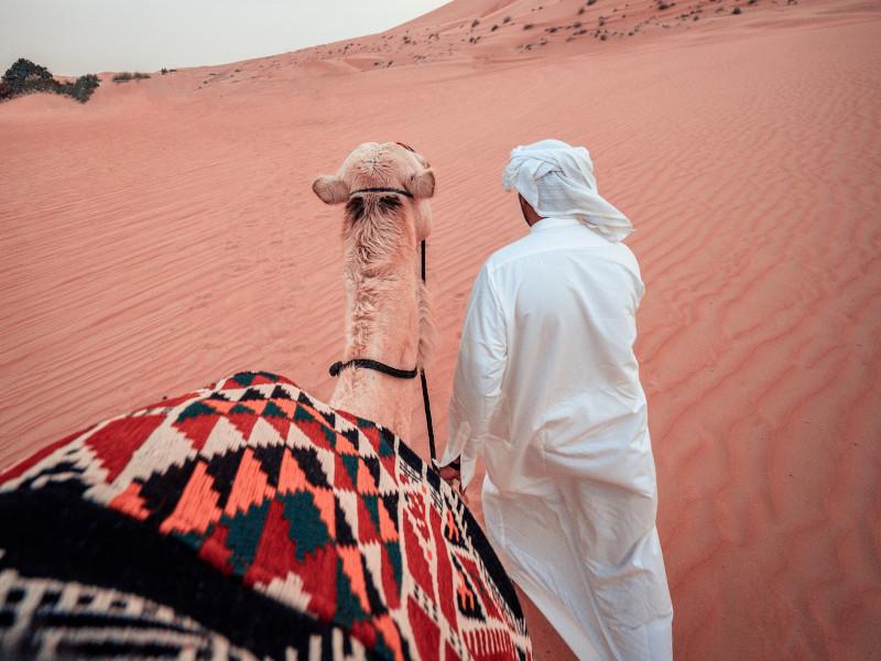 A la rencontre des chameaux, animaux étroitement liés à la culture bédouine