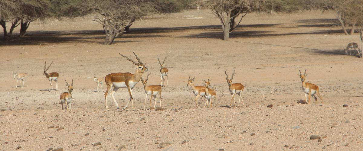 La reserve sir bani yas island